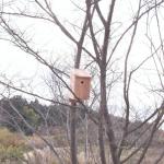 子どもと鳥の巣箱をつくる